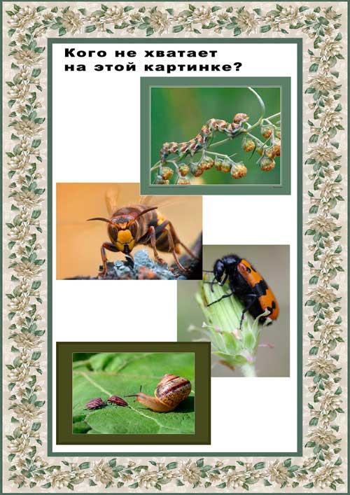 Тема тренируем память насекомые